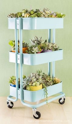 Create a fun succulent container garden in an Ikea Cart! Succulents and Sunshine