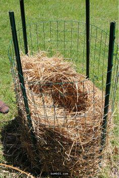 細圍欄35天種出大量馬鈴薯
