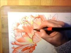 Pink Peonies - Watercolor Painting Time Lapse Process - YouTube  ... watercolor should be above all else fun ~ ~ ~ this looks like fun !!!