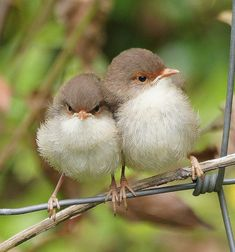 New Cute Bird Pictures Snuggles Ideas Funny Birds, Cute Birds, Pretty Birds, Beautiful Birds, Animals Beautiful, Baby Animals, Cute Animals, Australian Animals, Bird Pictures