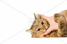 Cat grabbing a hand Stock Photo