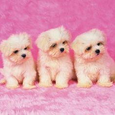 triplets.