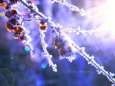 Cold morning light by Floreina-Photography on DeviantArt