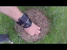 Musuroiul de furnici - frenezie
