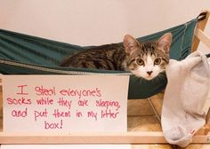 An epic gallery of cat shaming pictures that prove these cats are the naughtiest in the world. A hilarious cat shaming picture gallery. Funny Animal Memes, Funny Cat Videos, Funny Cat Pictures, Funny Cats, Funny Animals, Cute Animals, Hilarious Photos, Animal Funnies, Cats Humor