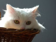 Photos d'animaux - Yummypets