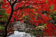 http://nsp-jp.com/gifu/  三田洞弘法(法華寺) Mitahorakobo Temple in Gifu city Gifu Prefecture Japan  #三田洞弘法 #岐阜市 #岐阜 #故郷巡礼 #聖地巡礼 #写真好きな人と繋がりたい #紅葉 #gifuphoto #gifu #travel #traveling #journey #tourism #photo #sugiyamanobu #Unknownjapan #instagram #instagramjapan #JapaneseTemple #JapaneseShrine #JapaneseTradition #TravelJapan #JapanTrip #ExploreJapan #JapanAdventure #JapanHoliday #CoolJapan #WonderfulDestinations #Amazing