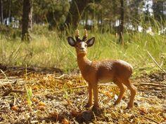 Roebuck in Fiaes (Portugal) Kangaroo, Portugal, Animals, Animales, Animaux, Animal, Kangaroos, Animais