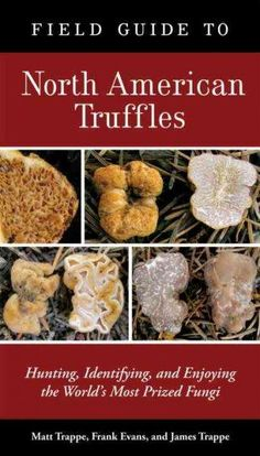 Field Guide to North American Truffles: Hunting, Identifying, and Enjoying the World's Most Prized Fungi/Matt Trappe, Frank Evans, James Trappe Edible Wild Mushrooms, Garden Mushrooms, Growing Mushrooms, Stuffed Mushrooms, Growing Truffles, Most Expensive Food, Truffle Mushroom, Truffle Hunting, Best Egg Laying Chickens