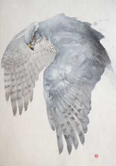 http://www.gladwellpatterson.com/product/flying-goshawk/