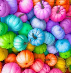 Rainbow Food, Taste The Rainbow, Rainbow Art, Over The Rainbow, Rainbow Colors, Diy Cadeau Noel, Rainbow Images, Rainbow Aesthetic, Rainbow Wallpaper