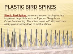 Plastic bird spikes are ideal to keep large birds like pigeons and gulls from landing and roosting. Gulls, Spikes, Plastic, Bird, Studs, Birds, Birdwatching