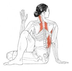 Increase your spinal flexibility and range of motion. Expands your chest and shoulders. Relieves thoracic or mid back spinal tension. Strengthens your abdominal oblique muscles. Stretches your hip rotators and hip, (Thoracic Back Pain) Yoga Kundalini, Yoga Meditation, Physical Fitness, Yoga Fitness, Yoga Muscles, Twist Yoga, Muscle Stretches, Mid Back Stretches, Fish Pose
