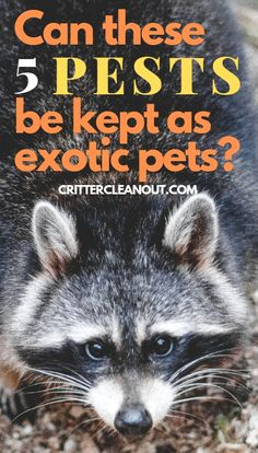 Can these 5 Pests kept as exotic pets? - Critter clean out Exotic Animals, Exotic Pets, Baby Skunks, Flying Squirrel, Special Pictures, Kittens And Puppies, Zoos, Reptile Cage