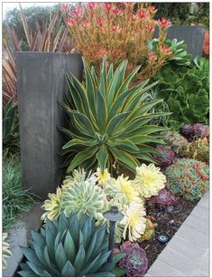 In modern and contemporary water-wise design, plants are viewed as sculptural and their maintenance is often minimal