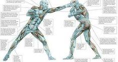 Anatomía de las artes marciales
