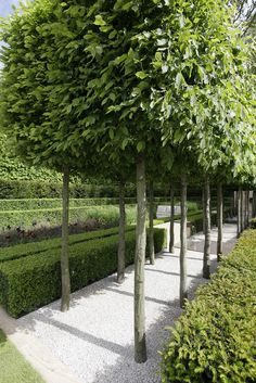 Garden Gallery- RHS Chelsea Flower Show 2009 - The Laurent-Perrier Garden