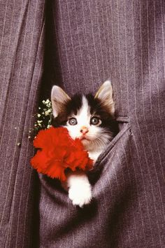 A Special Boutonnière for a cat loving groom...after my 'marry us' proposal like the fancy feast commercial!