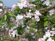 Spring Awakening, Earthy, Netherlands, Holland, Old Things, Wedding Inspiration, Amazing, Garden, Flowers