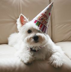 669 Best Happy Birthday Doggie Images In 2019