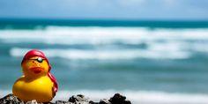 Meine Begleitung, Piratenente der Karibik, durfte in der Dominikanischen Republik natürlich auch nicht fehlen
