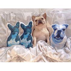 English Bulldog Blue cushion pillow Blue Cushions, Blue Throw Pillows, Kids Pillows, Cushion Pillow, Decorative Cushions, Take Me Home, Soft Hands, Big Boys, Bulldogs