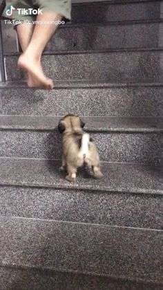 Trying to climb stairs - Funny Animals Cute Funny Animals, Cute Baby Animals, Funny Dogs, Animals And Pets, Cute Cats, Cute Animal Videos, Funny Animal Pictures, Cute Dogs And Puppies, I Love Dogs
