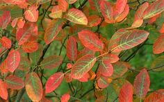 The best 20 trees for autumn colour, year-round interest, seasonal spectacular   and show pieces for the front garden