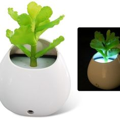 Simulated Money Grass Potted Plant Design LED Night Light with Intelligent Light Control from MORESTUFF4BUCKS -buy one get one free outlet for $11 on Square Market