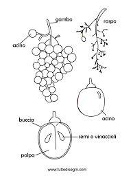 Risultati immagini per dall'uva al vino schede didattiche scuola primaria Cooperative Learning, Felt Art, Science And Nature, Art Therapy, Pixel Art, Raisin, Coloring Pages, Preschool, Clip Art