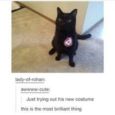 You have a need to lots of humor if you want to get through your day without losing your sanity.These black Cat Memes are helpful for that.Read This Top 24 Black Cat Memes Cute Funny Animals, Funny Cute, Cute Cats, Hilarious, Crazy Cat Lady, Crazy Cats, Pinterest Foto, Cats Diy, Animal Memes