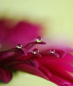Water on flower