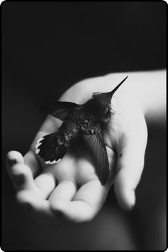 Early, last year, a male hummingbird knocked himself cold on my window; he bounced off, came to rest in a pool of near-freezing water in the gutter, half his beak clear. I ran downstairs, unlocked the shop, grabbed the ladder—got him out. He was twitching, eyes rolled back; I figured the worst. But, I wrapped him in a towel & laid him on the warm register. 30 minutes later, in my cupped hands, he wanted to fly. He stops by, weekly, a foot from my face, and tweets before darting into the…