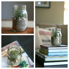 Mason jar air plant decor