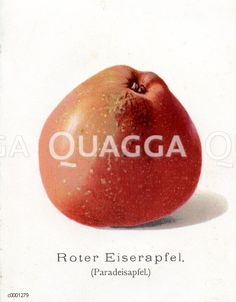 Roter Eiserapfel red apple