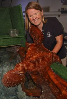 """Did you know that giant Pacific octopuses get """"attached"""" to their aquarists—in a good way? These intelligent animals recognize the staff and may even embrace them after a long absence. Please do not judge them for their looks...love is love!"""