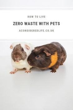 How to lead a low-waste lifestyle with your pets.How to lead a low-waste lifestyle with your pets.Low Waste Aesthetics Low Waste Lifestyle Information About 5 Zero Waste Items I . Natural Cat Litter, Puppy Pads, Rabbit Cages, Buy Pets, Pet Treats, Large Animals, Pet Store, Zero Waste, Biodegradable Products