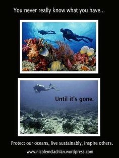 Protect our oceans, live sustainably, inspire others. Save Planet Earth, Save Our Earth, Our Planet, Scuba Diving Quotes, Save Our Oceans, Marine Biology, Environmental Issues, Faith In Humanity, Ocean Life