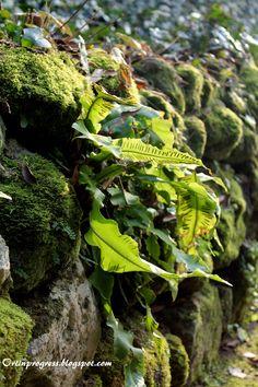 Giardini Giusti (VR) - muschio e felci