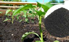 Solucan gübresi her türlü tarım alanında kullanılabilir ve %100 organik olması sebebiyle çevreye zarar vermez http://www.solucangubresi.org