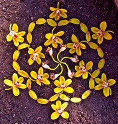SO many more to see at this website. Flower Mandala, Mandala Art, Meditation Rooms, Leaf Art, Rangoli Designs, Crystal Grid, Natural, Mandala Design, Mystic