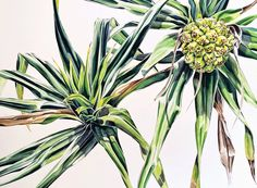 Pip Spiro -'Pandanus II' - 1020cm w x 90cm h (framed), watercolour & gouache on Arches paper
