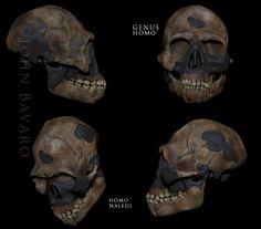 Homo naledi skull.