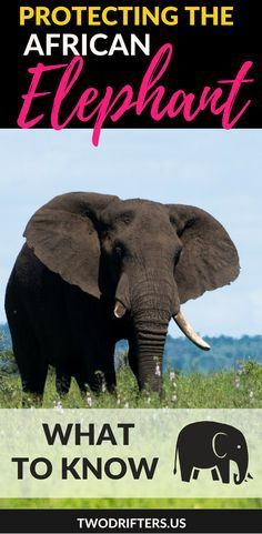 The African Elephant is facing very real threats. In big and small ways, here are some ways you can help to protect and conserve this beautiful species.