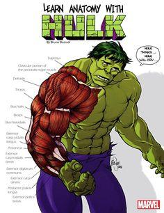 #Hulk #Fan #Art. (Leanr anatomy with Hulk) By: BrunoBessadi. ÅWESOMENESS!!!™ ÅÅÅ+