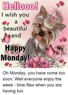 I Wish You A Beautiful And Happy Monday monday monday quotes happy… Happy Monday Images, Happy Monday Quotes, Monday Morning Quotes, Today Is Monday, Good Morning Happy Monday, Cute Good Morning Quotes, Good Morning Love, Good Morning Messages, Good Morning Greetings