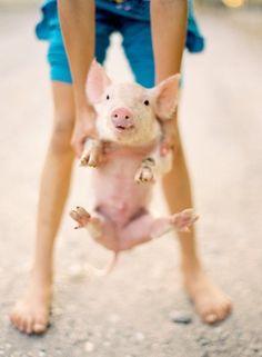 This little piggy.