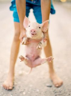 The cutest pic i think ive ever seen!    who doesn't love piggies? OMG cute!
