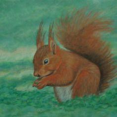 Écureuil : dessin au pastel sec sur papier velours 30 x40