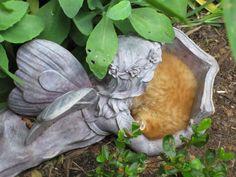 kitten sleeping safely